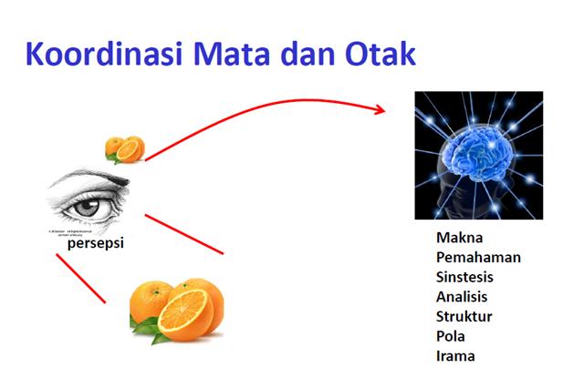 Kerjasama Mata dan Otak Dalam Proses Membaca